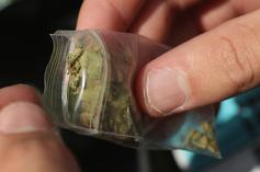 Weed Delivery Services Booming Amid Coronavirus