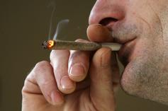 New Study Says Weed Is Not Good For Your Heart