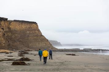 """""""Penis Fish"""" Wash Up On California Beach By The Thousands After Storm"""